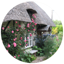thatchline-house-roses-thatched-roof